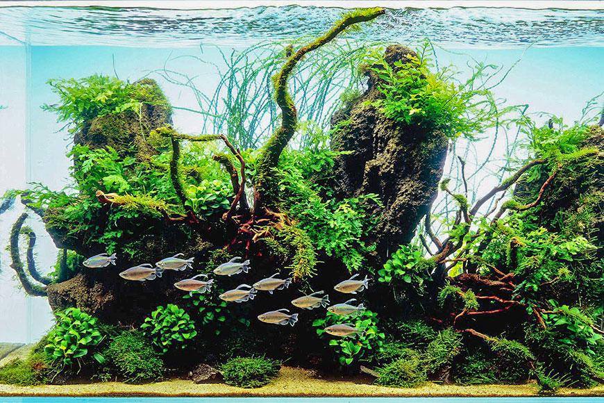 Aqua Forest Aquarium | Aquariums & Accessories